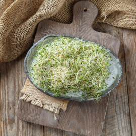 Микрозелень люцерны