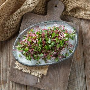 Микрозелень редиса розового Ред Коралл