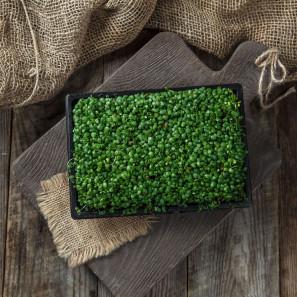 Микрозелень клевера
