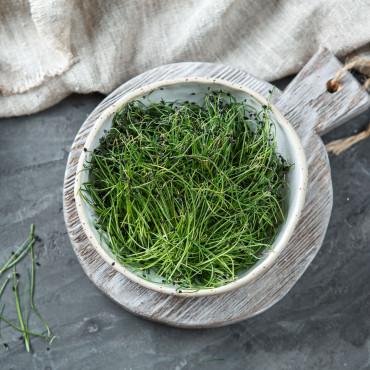Микрозелень лук Порей