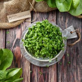Микрозелень кейла