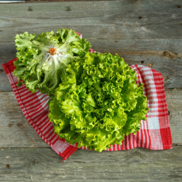 Салат зеленый листовой