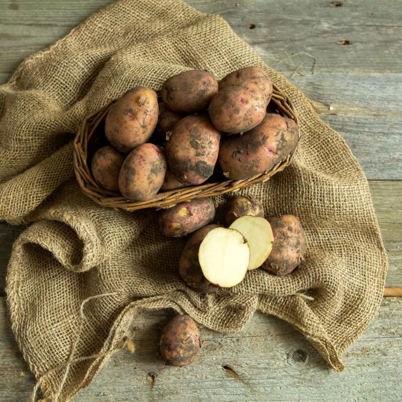 Картофель красныйКартофель этого сорта практически не зеленеет, а значит сохранит всю пользу во время хранения на Вашей кухне. Кроме этого он необычайно вкусный в любом виде: жареном, отварном, запечённом. И как бонус - этот картофель почти не имеет глазков.<br><br>Вес кг.: 2
